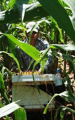 http://zonge.com/wp-content/uploads/2011/10/INSTR-v-corn.jpg